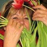 Louise Tulips